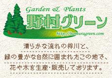 bnr-nomuragreen.jpg